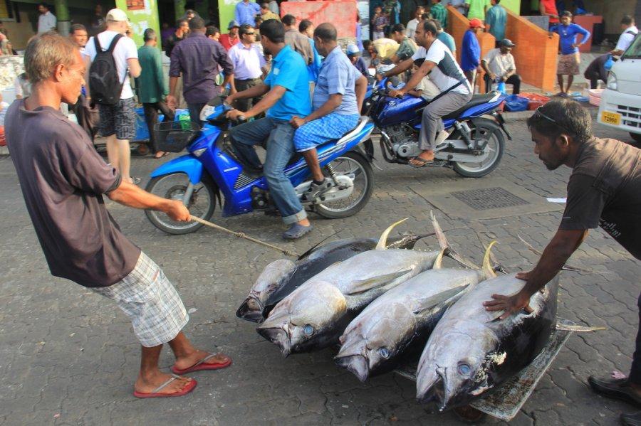 Maldivler Balıkçılık