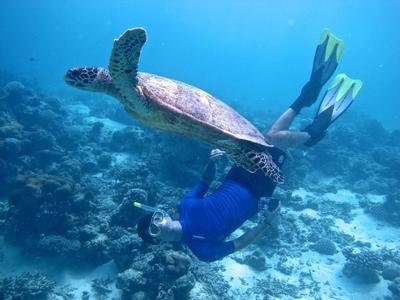 Maldivler Dalış